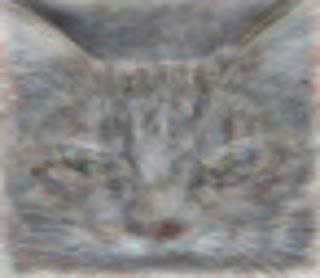 Google社が発表した猫の画像